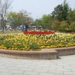 2麓山の杜花壇状況5.5-blog 002