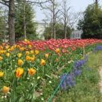 2麓山の杜花壇状況5.5-blog 018