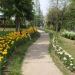 2麓山の杜花壇状況5.5-blog 021